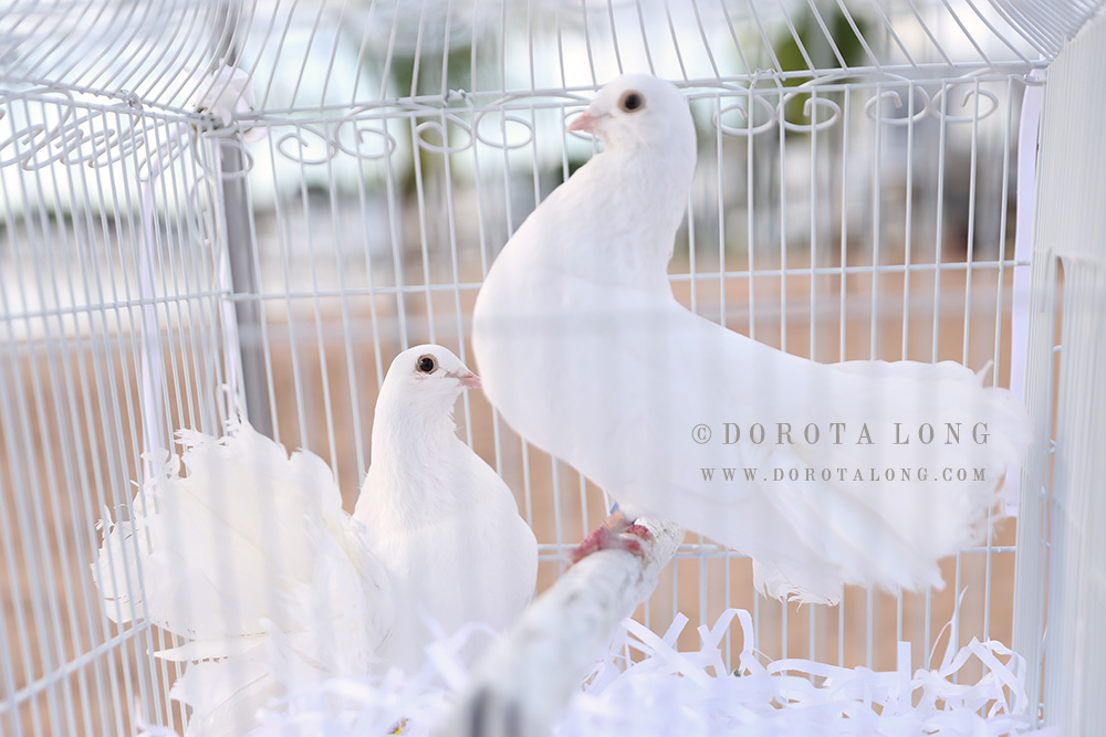 two white doves in a cage during wedding ceremony in new haven, ct
